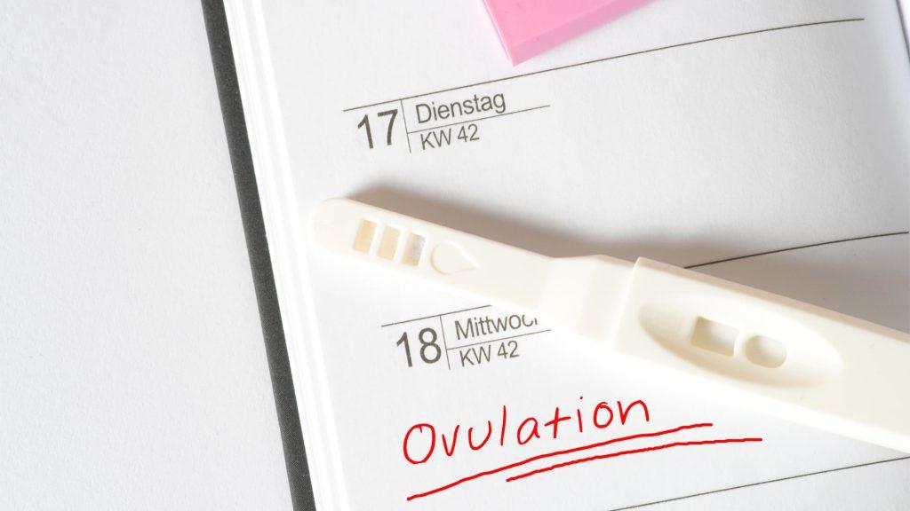 l'ovulation